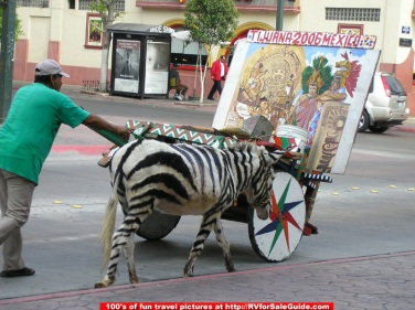 tijuana-zebra-donkey-picture.jpg